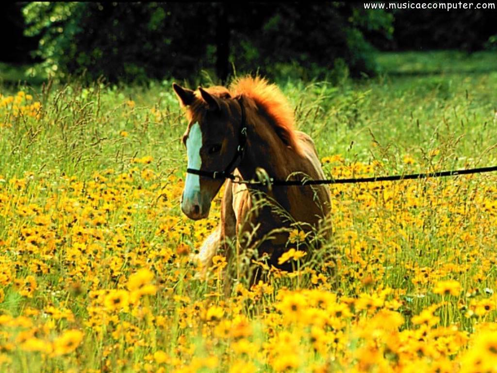 Sfondi per il desktop animali cavalli foto 65 66 foto for Foto desktop animali