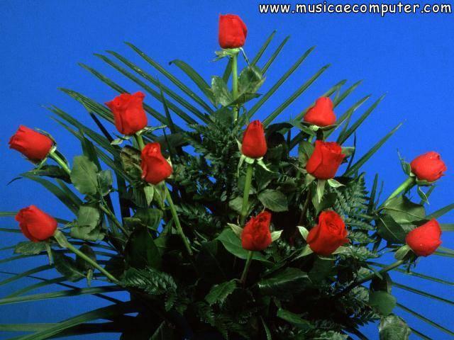 Sfondi per il desktop fiori e piante rose foto 6 11 for Immagini per desktop fiori