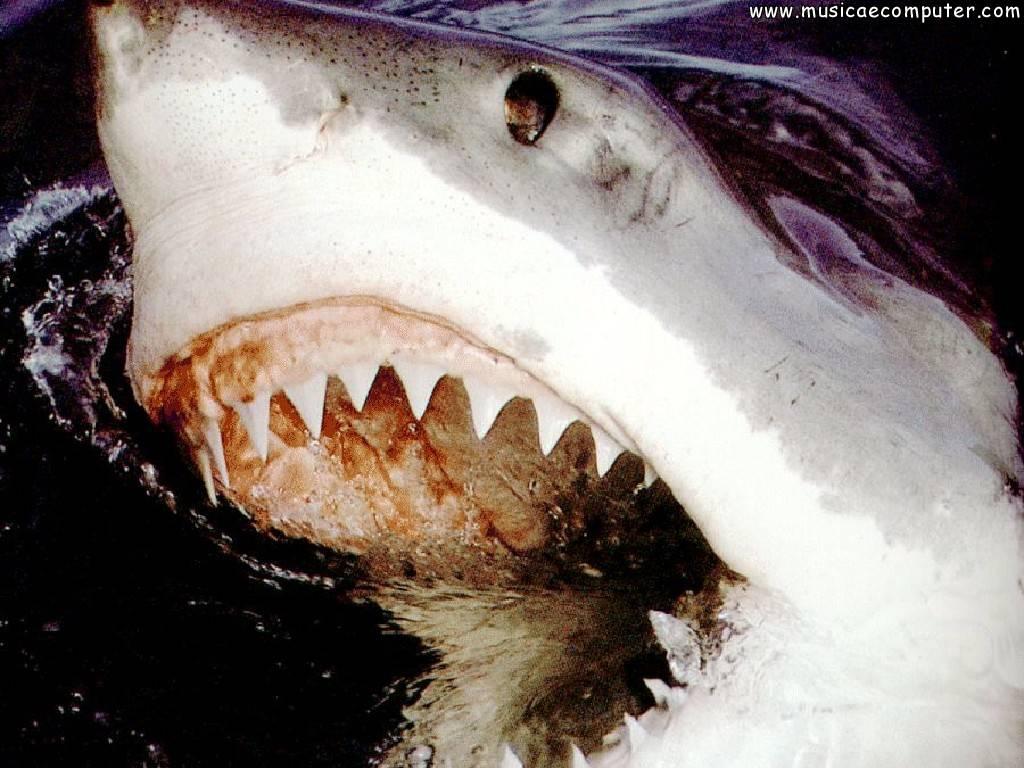 Sfondi per il desktop animali marini squali foto 5 6 for Foto desktop animali