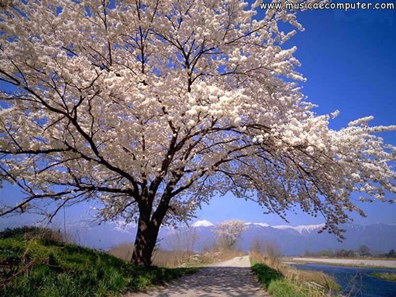Sfondi per il desktop fiori e piante alberi foto 5 9 for Immagini per desktop fiori